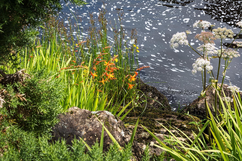 <em>Am Rande der Aasleagh Falls wachsen viele verschiedene Blumen</em>