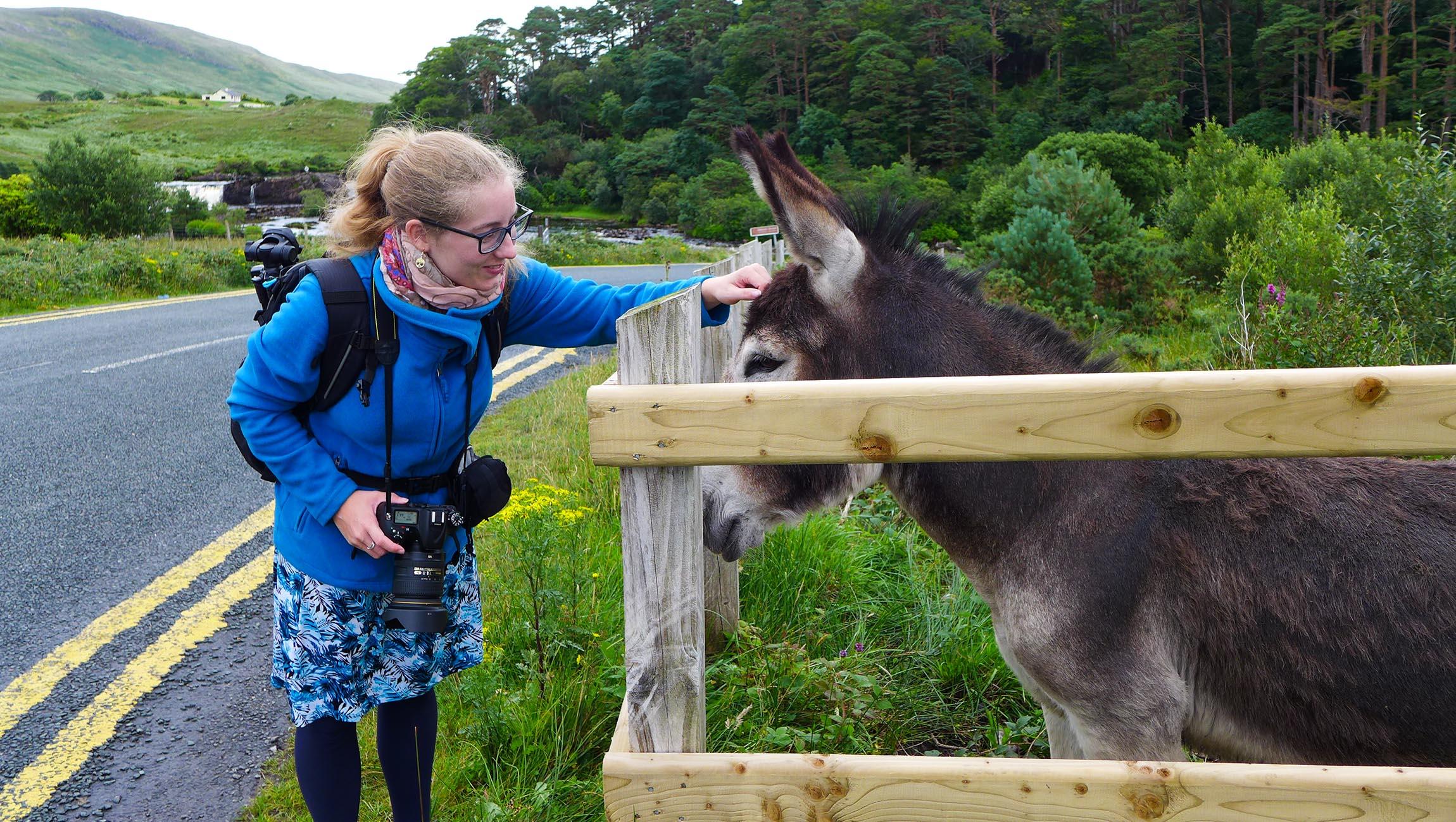 An einem Esel kann ich einfach nicht vorbei gehen :)