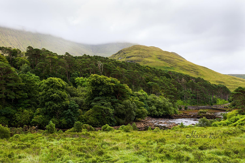 Grün findet man in Irland in jeder Farbnuance